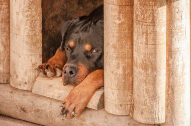 Stylová bouda pro psa