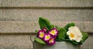 Jaké květiny rozzáří dům než začne jaro?