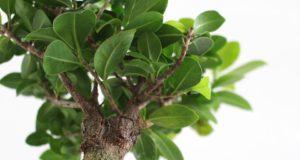 Proměňte domácnost s pomocí pokojových rostlin
