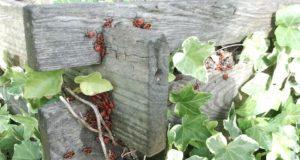 Máte na zahradě kompostér? A víte, co do něj patří a co nikoliv?